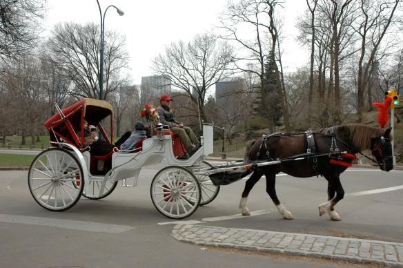 Hansom Cab, Central Park, NY