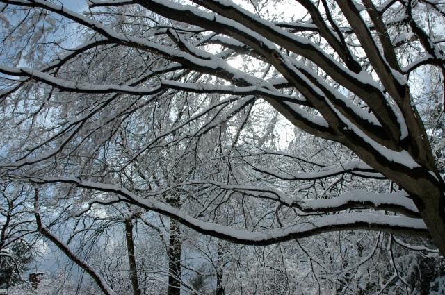 The blue sky softens Winter's stark beauty.