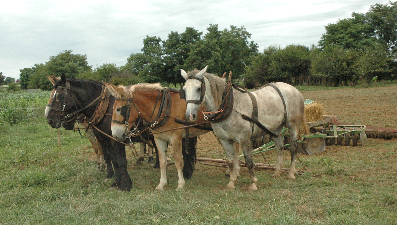 Farm horse for Horse farm