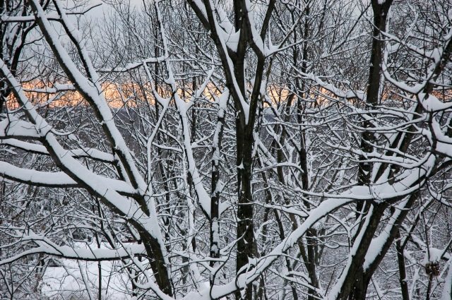 At dawn, a tree opens its branches to embrace the Winter day.