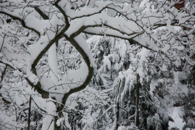 The secret world of Winter lies beyond.