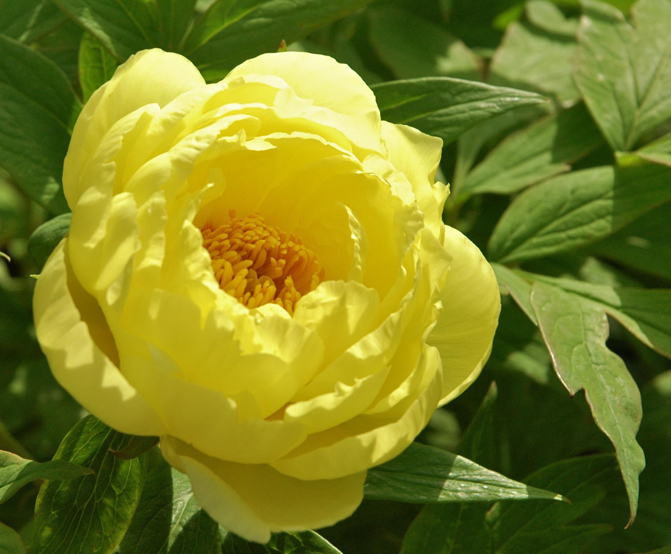 Yellow Flower Power Bmore Energy