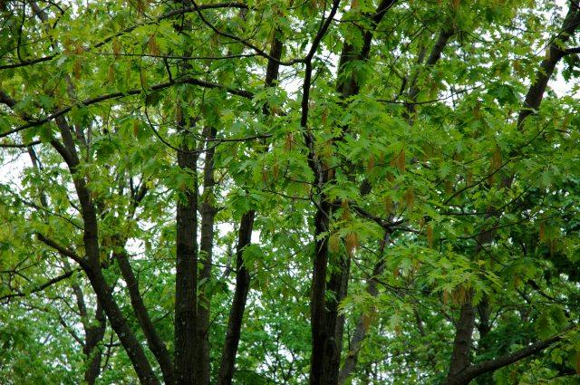 a dense forest