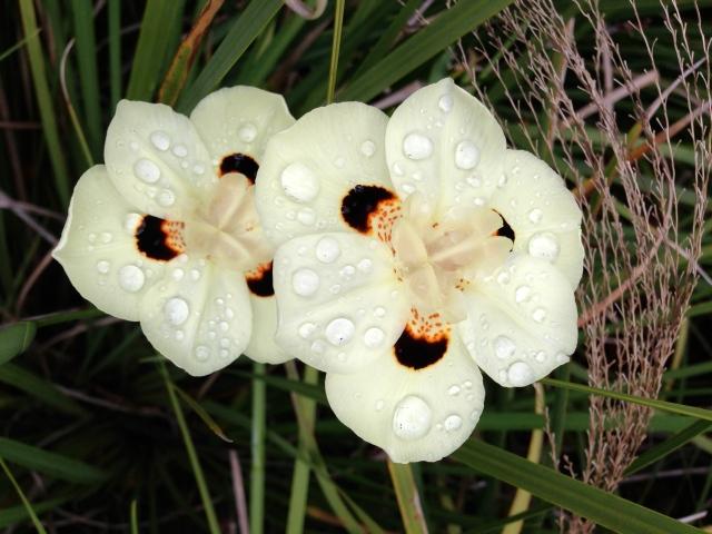 type of flower