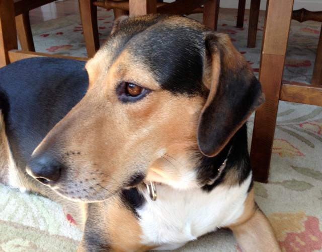 Louie the hound dog.
