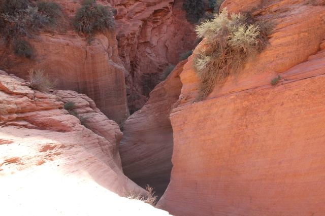 Gorgeous Red Rocks!