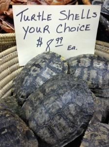 Turtle Shells.