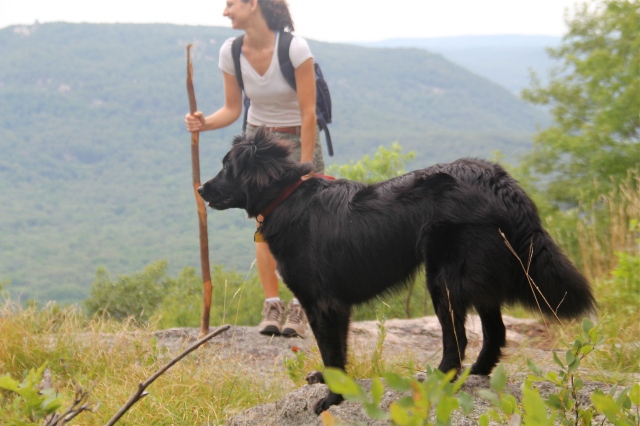 Hiking Bear Mountain with a stand-in for a mountain goat.