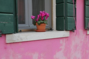 Pink up close.