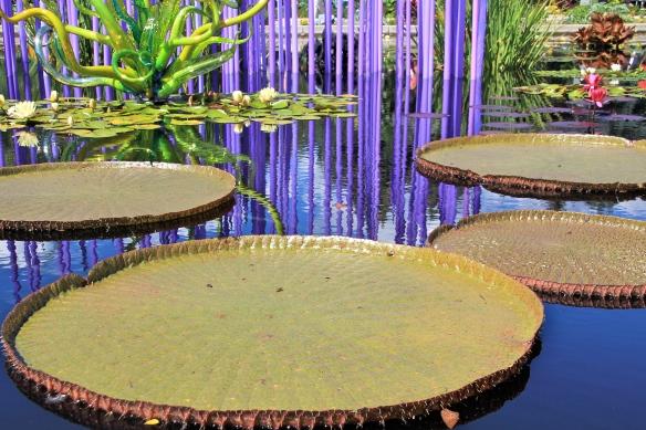 Victoria 'Longwood Hybrid' Water Platter