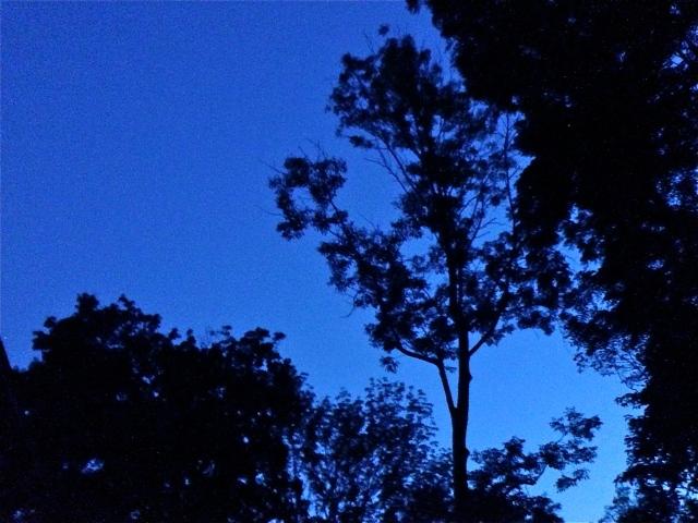 Indigo sky in my backyard.