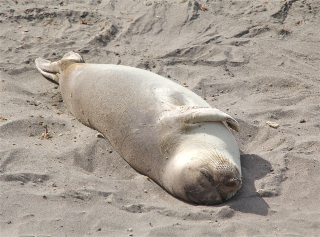 Isn't this seal adorable?