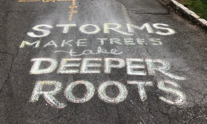 """Storms make trees take deeper roots."""